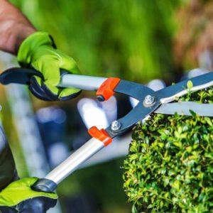 Gardening Hygiene Tips To Keep Your Garden Healthy